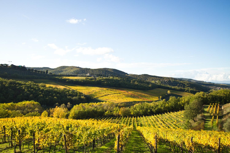 Lamole di Lamole / Santa Margherita winery